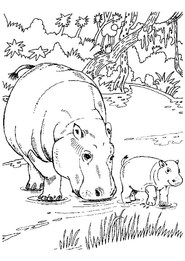 Coloriage et dessins gratuits Hippopotame et son petit à imprimer