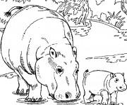 Coloriage Hippopotame et son petit dans l'eau