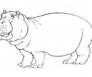 Coloriage et dessins gratuit Hippopotame facile à imprimer