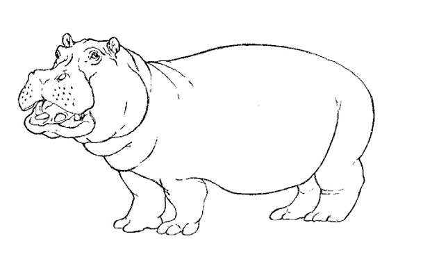 Coloriage Hippopotame Facile Dessin Gratuit à Imprimer