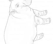 Coloriage Hippopotame réaliste