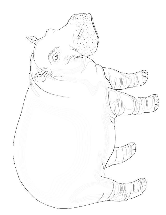 Coloriage et dessins gratuits Hippopotame réaliste à imprimer