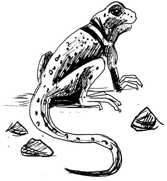 Coloriage et dessins gratuits Iguane au crayon à imprimer