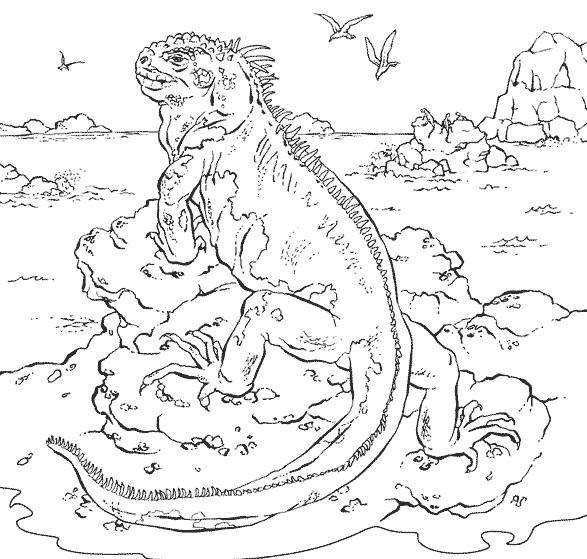 Coloriage et dessins gratuits Iguane dans une île à imprimer