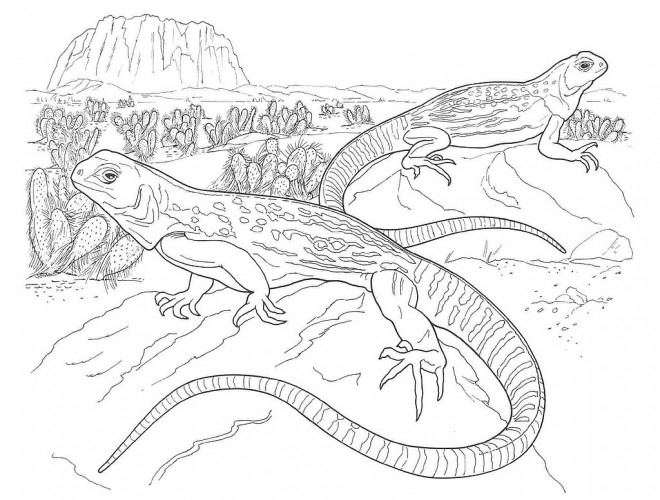 Coloriage et dessins gratuits Iguane de Mexique à imprimer