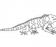 Coloriage Iguane dormant