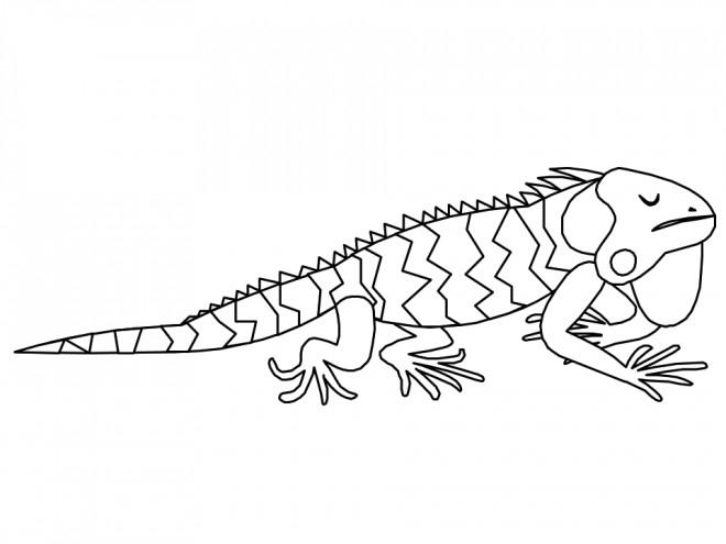 Coloriage et dessins gratuits Iguane dormant à imprimer