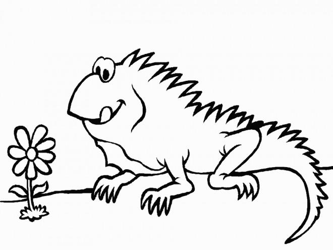 Coloriage iguane et fleur dessin gratuit imprimer - Coloriage iguane ...