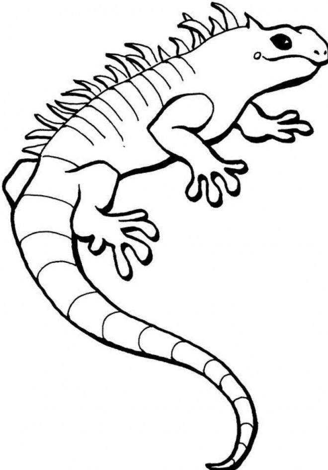 Coloriage et dessins gratuits Iguane facile à imprimer