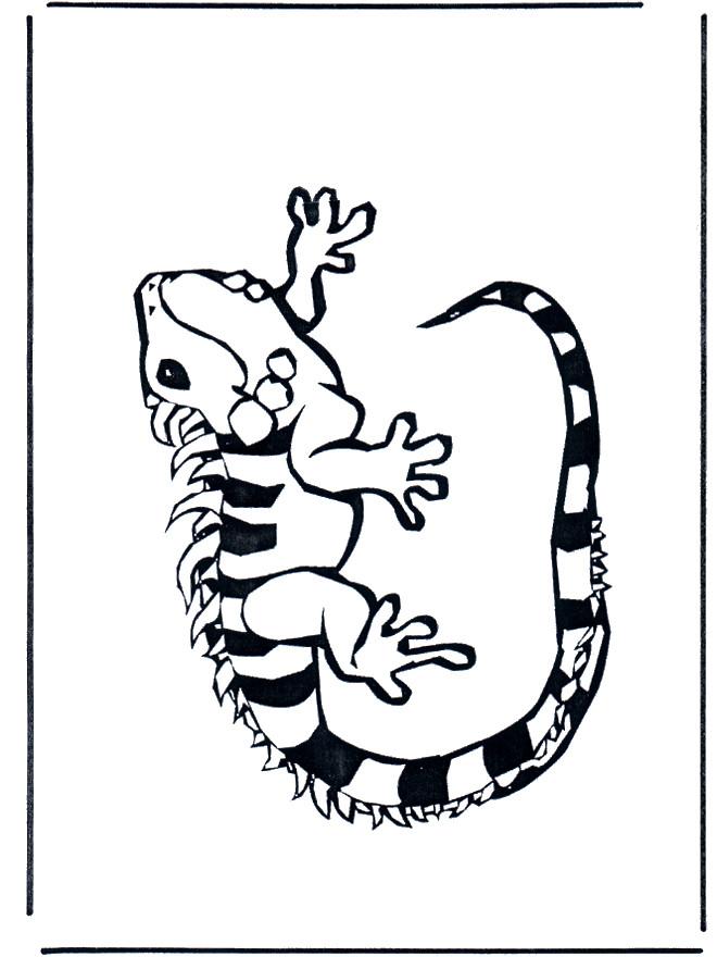 Coloriage iguane noir et blanc dessin gratuit imprimer - Coloriage iguane ...