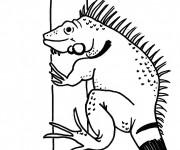 Coloriage et dessins gratuit Iguane terrestre à imprimer