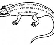 Coloriage et dessins gratuit Iguane vert à imprimer