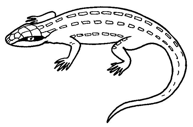 Coloriage et dessins gratuits Iguane vert à imprimer