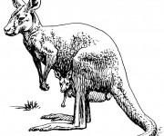Coloriage et dessins gratuit Kangourou au crayon noir à imprimer