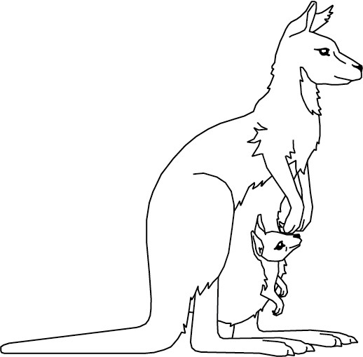 Coloriage Kangourou.Coloriage Kangourou Australie Dessin Gratuit A Imprimer