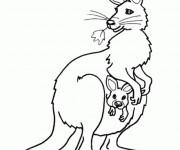 Coloriage et dessins gratuit Kangourou magnifique à imprimer