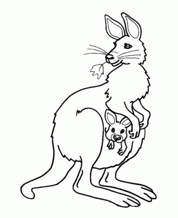 Coloriage kangourou magnifique dessin gratuit imprimer - Kangourou dessin ...