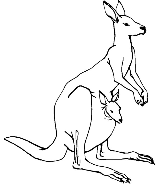 Coloriage et dessins gratuits Kangourou maternelle à imprimer