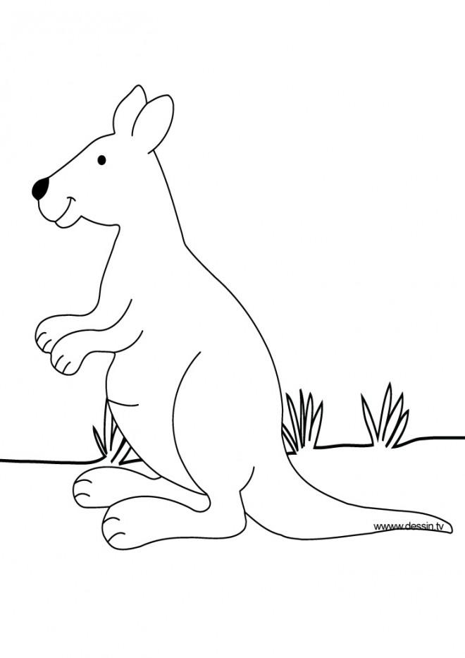 Coloriage et dessins gratuits Kangourou pour enfant à imprimer