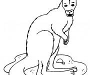 Coloriage Un Kangourou te regarde
