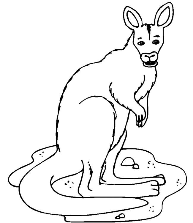 Coloriage et dessins gratuits Un Kangourou te regarde à imprimer