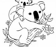 Coloriage dessin  Koala 1