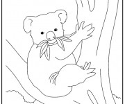 Coloriage dessin  Koala 14
