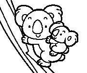 Coloriage dessin  Koala 17