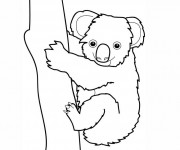 Coloriage dessin  Koala 3