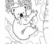 Coloriage dessin  Koala 7