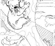 Coloriage dessin  Koala 8