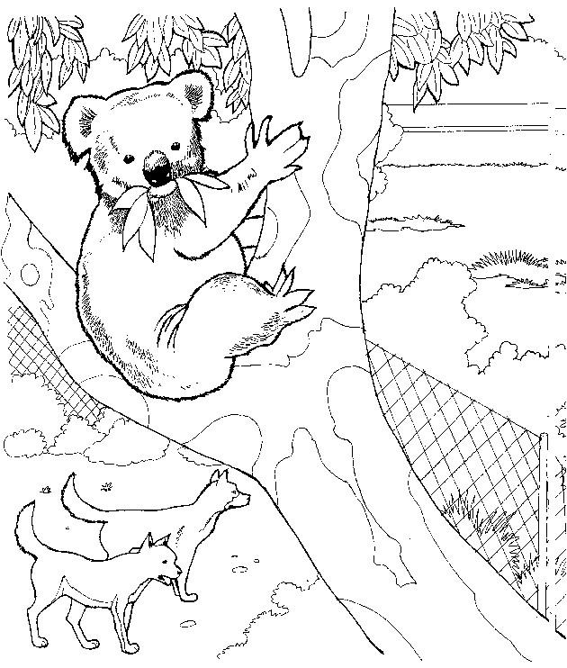 Coloriage et dessins gratuits Koala australie à imprimer