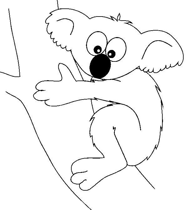 Coloriage et dessins gratuits Koala avec le regard drôle à imprimer