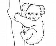 Coloriage et dessins gratuit Koala couleur à imprimer