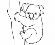 Coloriage Koala couleur