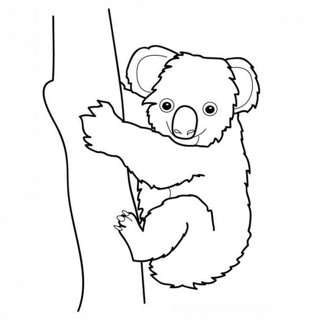 Coloriage Koala Couleur Dessin Gratuit A Imprimer