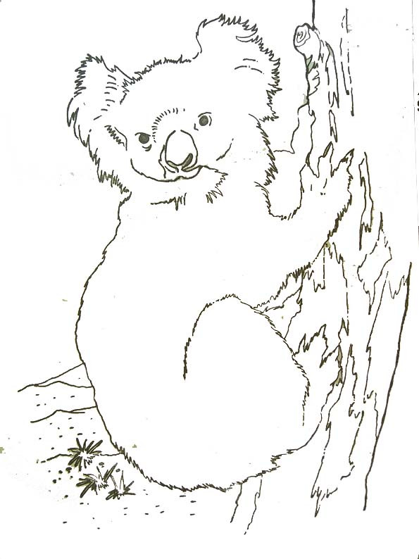 Coloriage et dessins gratuits Koala dessin réel à imprimer