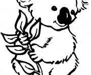 Coloriage et dessins gratuit Koala en couleur à imprimer