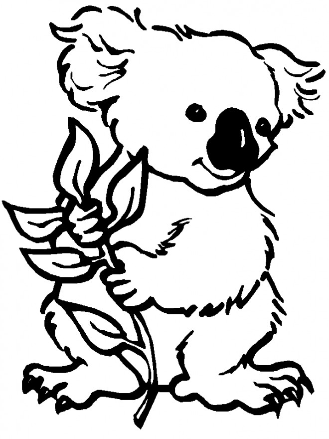 Coloriage Gratuit Koala.Coloriage Koala En Couleur Dessin Gratuit A Imprimer