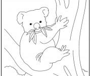 Coloriage Koala en mangeant sur l'arbre