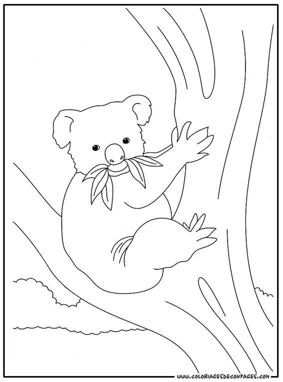 Coloriage et dessins gratuits Koala en mangeant sur l'arbre à imprimer