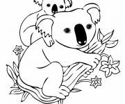 Coloriage et dessins gratuit Koala et son petit à imprimer