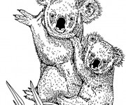 Coloriage Koala et son petit au crayon