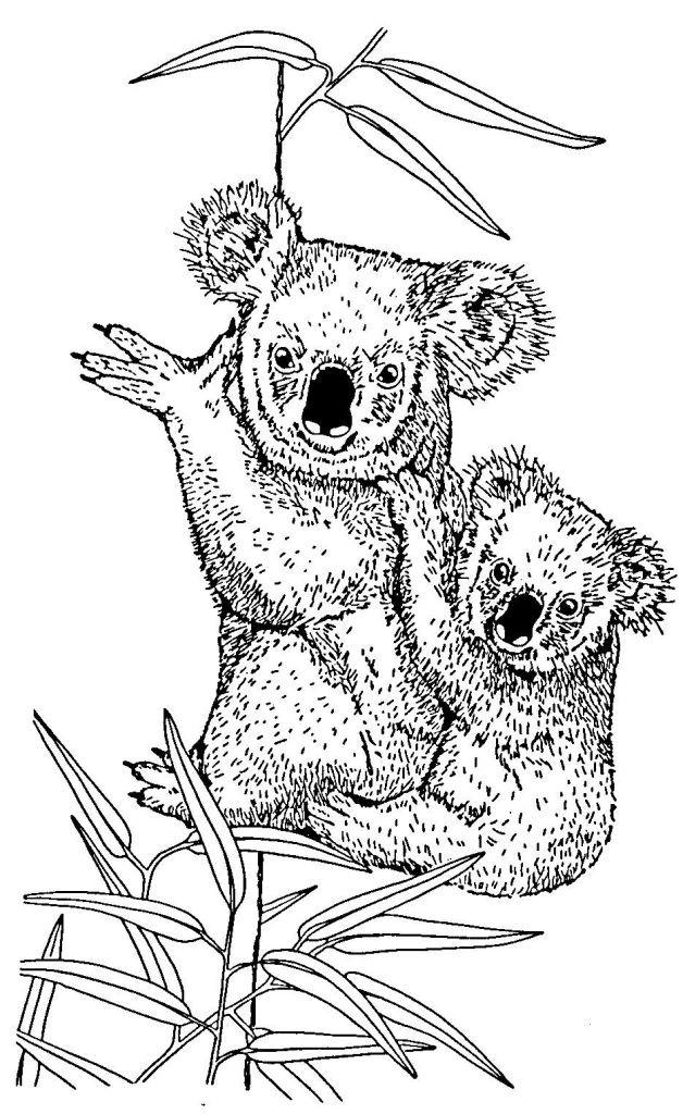 Coloriage et dessins gratuits Koala et son petit au crayon à imprimer