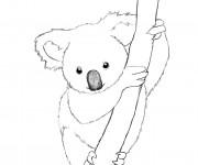 Coloriage et dessins gratuit Koala mandala à imprimer