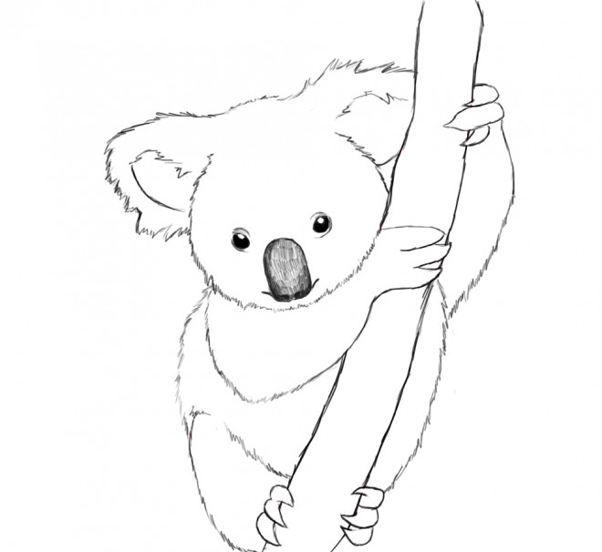 coloriage koala mandala dessin gratuit  u00e0 imprimer