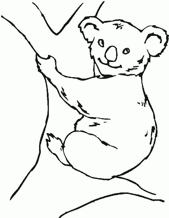 Coloriage et dessins gratuits Koala simple à imprimer