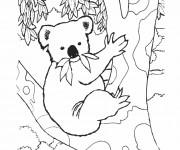 Coloriage Koala sur une arbre