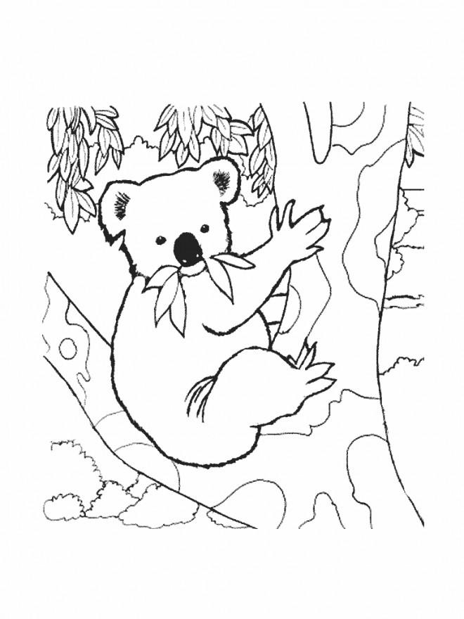 Coloriage et dessins gratuits Koala sur une arbre à imprimer