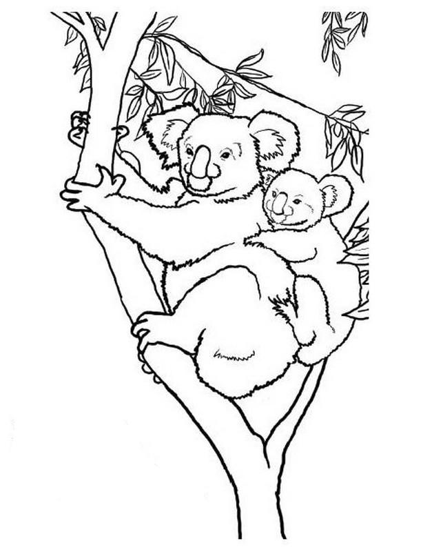 coloriage mère koala et son petit en noir et blanc